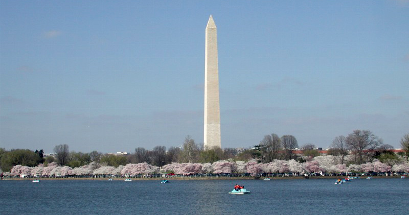 Cherry Blossom Days in DC