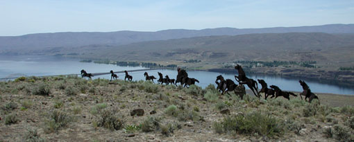 The Wild Stallions and the Columbia River